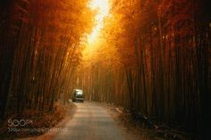 Driving in a dream by HansonMao