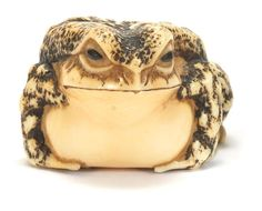A rare ivory netsuke of a toad By Masakatsu, Ise Province, 19th century
