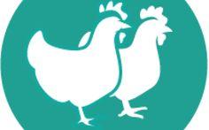 Nel pollo che compriamo non ci sono residui di antibiotici nocivi per la salute Il 74% degli italiani crede che anche gli antibiotici siano utilizzati negli allevamenti dei polli p salute alimentazione allevamento pollo