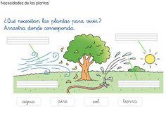 EL BLOG DE PRIMERO 2: ¿QUÉ NECESITAN LAS PLANTAS PARA VIVIR?