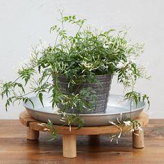 Outdoor Garden Furniture, Outdoor Rooms, Outdoor Gardens, Garden Planters, Planter Pots, Outdoor Table Tops, Front Steps, Teak Wood, Natural Materials