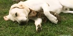 Whisper Sweet Nothings To Your Significant Other! More photos of cute and funny puppies, visit http://pewpaw.com/