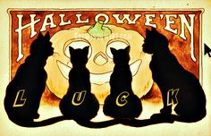 Find your #Halloween black cat luck. See all our unique artwork @catwisdom101 #cats