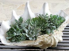 10 ways to decorate with succulents in your home
