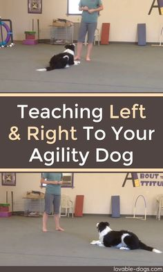 Teaching Left And Right To Your Agility Dog ►► // KaufmannsPuppyTraining.com // Kaufmann's Puppy Training // dog training // dog love // puppy love //