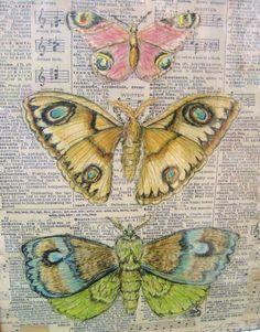 """Framed Moth Specimen Print, 9"""" x 11"""", Vintage Insect Print, Original Art Moth Drawing Collage. $22.00, via Etsy."""