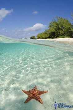 Seven Mile Beach in Grand Cayman is a public beach with fine, dazzling white sand and crystal clear blue water. We even spotted a starfish or two! Learn more by visiting JetBlue Getaways.