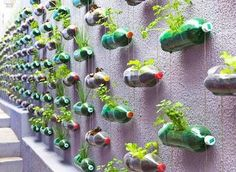 garden wall idea for kids with a bonus of recycling! ♻♻♻ this would be perfect for out unit because it includes recycling and plants. This would be fun and rewarding if they were able to hang them on the hallway walls.