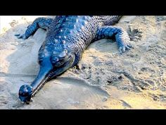 14 Creatures You Never Knew Existed - YouTube