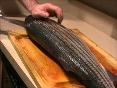 How To: Filet and Trim A Striped Bass - YouTube