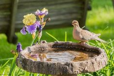 This wooden bird bath or textured bird bath that resembles wood, is a cute way to bring the birds on by. I could imagine a bird bath like this one outside of a corner café or garden art party. The dove stops by for a drink of water as the gorgeous purple flowers surrounding the bird bath grow underneath the strong sun. The texture in this bird bath is enough to add intrigue without much color or design.