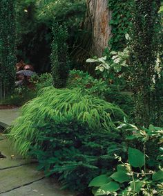 "This is a great article, ""Conifers for Shade,"" from Fine Gardening Magazine.  Don't skimp on year 'round interest just because there is shade!  :-)"