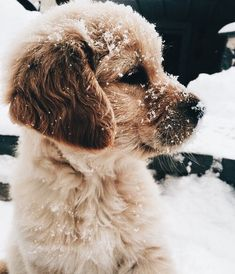 Snow pup I #awesomepawsomepuppies