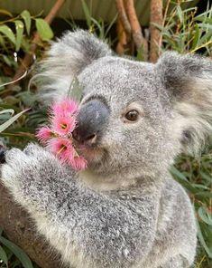 Australian Reptile Park, Australian Bush, Australian Birds, Cute Funny Animals, Cute Baby Animals, Cute Friends, Best Friends, In The Zoo, Animal Magic