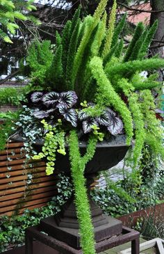 There are lots of affordable backyard landscaping ideas you can look into. For a backyard landscape upgrade, you don't need to spend so much cash to get an outdoor look that is easy and affordable. Cheap Landscaping Ideas, Landscaping Supplies, Backyard Landscaping, Fence Ideas, Asparagus Fern, Garden Spaces, Garden Pots, Garden Ideas, Herb Garden