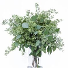 FiftyFlowers.com - Seeded Eucalyptus Flower