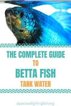 Good water care is the staple of good aquarium and betta fish care. If you look after your fish's water so many problems can be avoided. This one-page guide will help you answer the most common questions Aquarium Set, Aquarium Gravel, Aquarium Fish Tank, Nano Aquarium, Fish Aquariums, Colorful Fish, Tropical Fish, Beta Fish Care, Betta Fish Tank