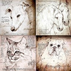 leonardo da vinci drawings of animals - Google Search