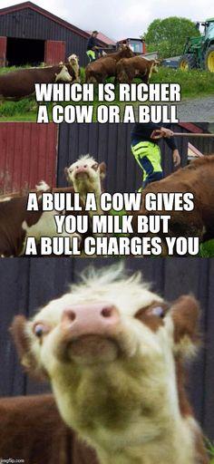 Bad pun cow