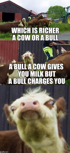 Bad pun cow