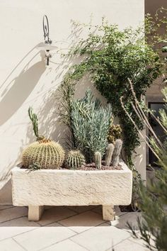 Organic Gardening Supplies Needed For Newbies Don Totu Dimora Storica Luxury B&B In Puglia, Italy Est Living Garden Villa, Garden Pool, Exterior Design, Interior And Exterior, Cactus E Suculentas, Backdrops For Parties, Gardening Supplies, Dream Garden, Beautiful Gardens