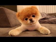 10 Funniest Dog Videos - YouTube