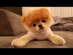 10 Funniest Dog Videos - YouTube