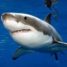 The 15 Most Surprising Shark Facts