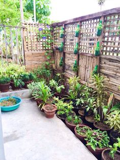 My own little garden. Love the bottle planters :)