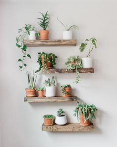 Timber Edge Floating Shelves Lively up your space with our TIMBER EDGE floating shelves. For storage or display, these rustic shelves are sure to bring the great out doors into your home. Shelves are hand crafted from carefully selected Diy Hanging Shelves, Floating Shelves Diy, Rustic Shelves, Plants On Shelves, Indoor Plant Shelves, Decorative Shelves, Wall Of Plants Indoor, Garden Shelves, Plants In The Home