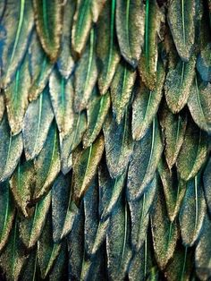 Feathers are so beautiful almost as beautiful as flowers... not quite