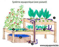 Pour débuter l'aquaponie il ne vous faut pas grand chose et vous pouvez presque tout récupérer gratuitement en fouinant à droite et à gauche. Les concepts d'aquaponie et de permaculture veulent qu'on utilise des matériaux simples ou de récupération. On peut, par exemple, se procurer un tonneau, un fût, une cuve IBC, un aquarium ou …