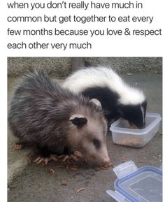 Wholesome Animal Memes To Start The Week Off Right - I Can Has Cheezburger? Bff Quizes, Really Funny Memes, Make You Cry, Love And Respect, Wholesome Memes, Faith In Humanity, Coffee Quotes, Animal Memes