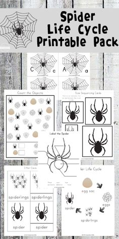 FREE Spider Life Cycle Worksheets for Kids to help kids practice alphabet letters, sequencing, counting, and so much more for toddler, preschool, prek, kindergarten, and first grade