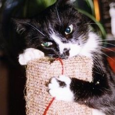 Cat trees, condos, and scratching posts can be some of the most expensive items you ever buy for your cat, yet they really enrich the lives of...