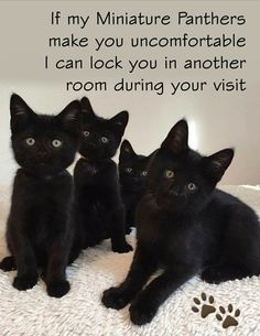 Funny Cat Memes, Cute Memes, Funny Cats, Funny Animals, Cute Animals, Pretty Cats, Pretty Kitty, Beautiful Cats, Funny Animal Pictures