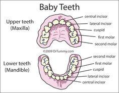 at the age of 57 I still have a few of my baby teeth!