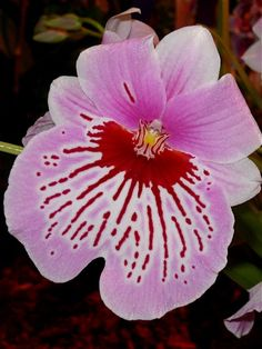 orchids - Google Search