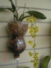 Orchid Planters, Orchid Pot, Orchids Garden, Big Garden, Garden Art, Hanging Orchid, Growing Orchids, Orchid Arrangements, Deco Floral