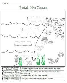 tidal pool animals education on pinterest tide pools animal fun and ocean. Black Bedroom Furniture Sets. Home Design Ideas