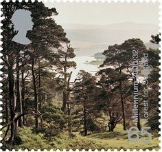 Forest Doire Dach #SpecialStamp from 2000 'Tree and Leaf'