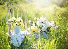 Łąka, Trawa, Krzesło, Bukiety, Kwiatów