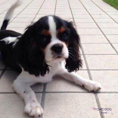 Igor! A new #friend for #Chic4Dog