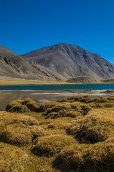 Located at an altitude of 16,618 feet, Tso Ltak is a beautiful high altitude lake on the way to it's more famous cousin - Pangong Tso in Ladakh, India.