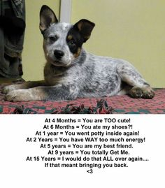 Mostly true.  Tho i have never had a dog that potty trained as fast as my heelers.  Generally 1-2 wks so cant understand the one tear comment.