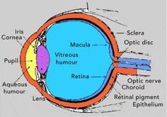 this is a diagram of the eye anatomy and physiology