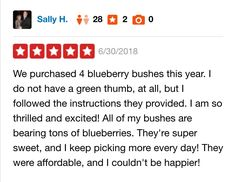 DiMeo Blueberry Bushes Customer Review