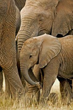 Elephants by Martin Harvey