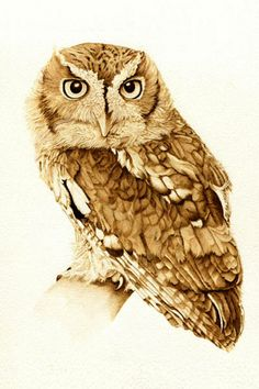 Screech Owl Portrait (sold) - pyrographic illustration by Cate McCauley