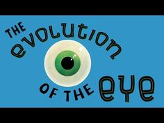 'The Evolution of the Human Eye', A Short Animation Explaining How the Eye Has Adapted Throughout the Years